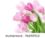 Stock photo tulip flowers isolated on white 96690913