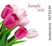 tulip | Shutterstock . vector #96732190