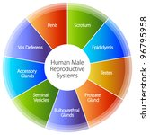 an image of a human male... | Shutterstock .eps vector #96795958