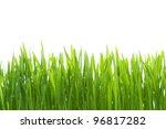 wet grass on white background | Shutterstock . vector #96817282