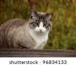 Cross Eyed Tabby Cat On Resting ...