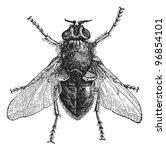 blue bottle fly or bottlebee ...   Shutterstock .eps vector #96854101