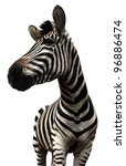 Plains Zebra On White...