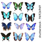 Stock photo very many blue butterflies isolated on white background 96926969