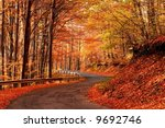 Autumn scene at the forest - stock photo