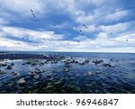 Rocky Beach  Altona  Seagulls