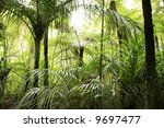tropical forest | Shutterstock . vector #9697477