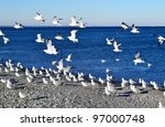 A Swarm Of Seagulls Sitting And ...
