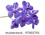 violet orchids this image... | Shutterstock . vector #97002701