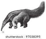 giant anteater  myrmecophaga... | Shutterstock .eps vector #97038395
