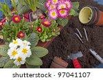 Studio Shot Of Planting Flowers ...