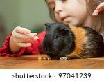 Little Girl Feeding Guinea Pig...