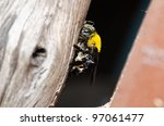 Carpenter Bee In The Nature Or...