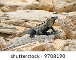 Lizard Sunbathing On Rock