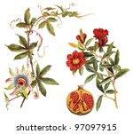 left blue passion flower ...   Shutterstock . vector #97097915