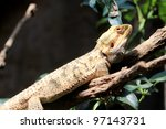lizard hang on branch - stock photo