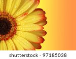 Gerber Daisy  Orange And Yellow ...