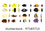 3d render of tropical fishes | Shutterstock . vector #97185713