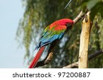 parrot portrait on the tree | Shutterstock . vector #97200887