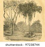 Small photo of Entada - liana - old illustration by unknown artist from Botanika Szkolna na Klasy Nizsze, author Jozef Rostafinski, published by W.L. Anczyc, Krakow and Warsaw, 1911