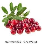 Ripe Cranberries Cowberries...