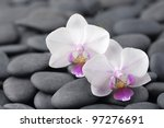 Set Of Two Beautiful Orchid On...