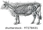 The Structure Of The Cow  The...