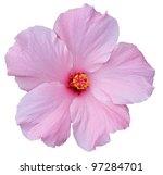 Hawaiian Pink Hibiscus Isolate...