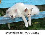 Stock photo two stray cats resting on the bench 97308359