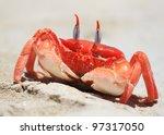 Ghost Crab On A Beach