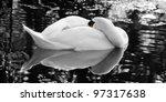 The Sleeping Swan   Black And...