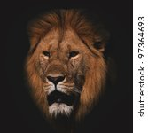 The Lion On A Black Background