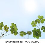 Young And Fresh Clover Leaves...