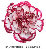 Red And White Flower Isolated...