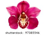 Purple Orchid Flower Isolated...