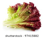 Fresh Red Lettuce On White