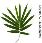 bamboo isolated on white...   Shutterstock . vector #97436684
