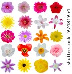 spring flower heads on collage | Shutterstock . vector #97481954