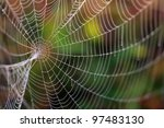 Spider Web With Colorful...