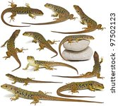 Set Of Lizards Isolated On A...