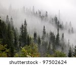 Misty Beech Forest On The...