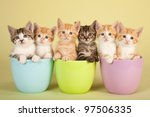 Six Cute Kittens Sitting Insid...