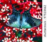 butterfly on flowers | Shutterstock . vector #97523462