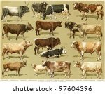 different breeds of cows.... | Shutterstock . vector #97604396