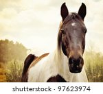 Stock photo paint horse in pasture 97623974