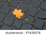 A Lone Yellow Maple Leaf In...