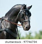 Black Friesian Horse Carriage...