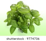 basil plant in pot | Shutterstock . vector #9774736