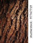 Bark Of Tree Tree Texture
