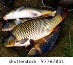 Fish Carp In Fish Net Background
